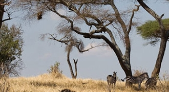 6-Day Tanzania (4-Day Safari) Tour from Moshi
