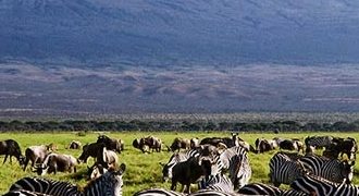 9-Days Dubai and Kenya Safari Tour from Dubai