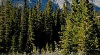 10-Day Yellowstone, Grand Teton, Glacier, Mt Rainier National Parks, Victoria and Whistler Tour from Vancouver/Seattle