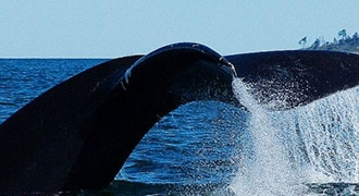 2-Day Charlevoix Grand Canyon and Whale Watching Tour from Montreal